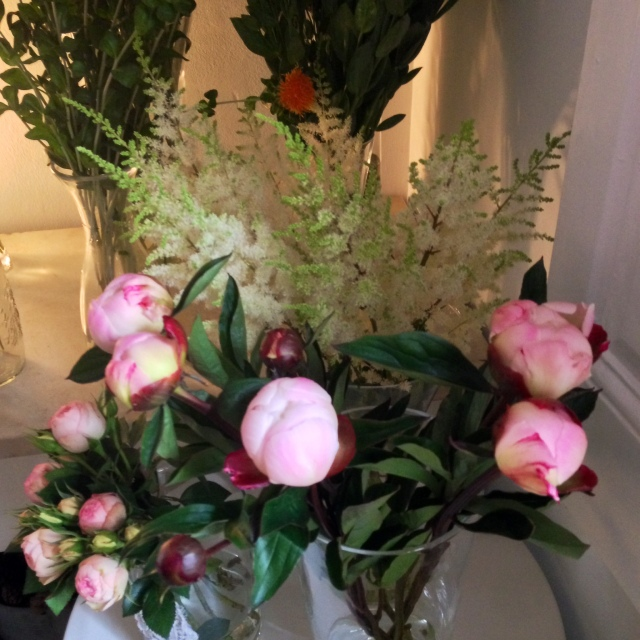 magnolia and co peonías