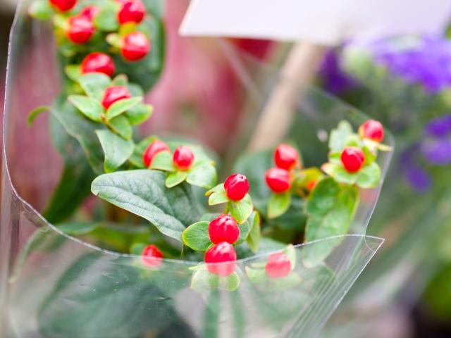 flores mercado semanal st albans