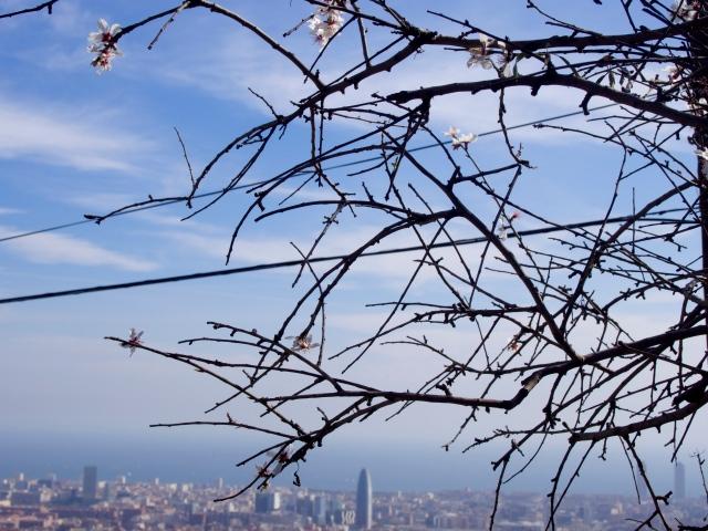 alemndros en barcelona